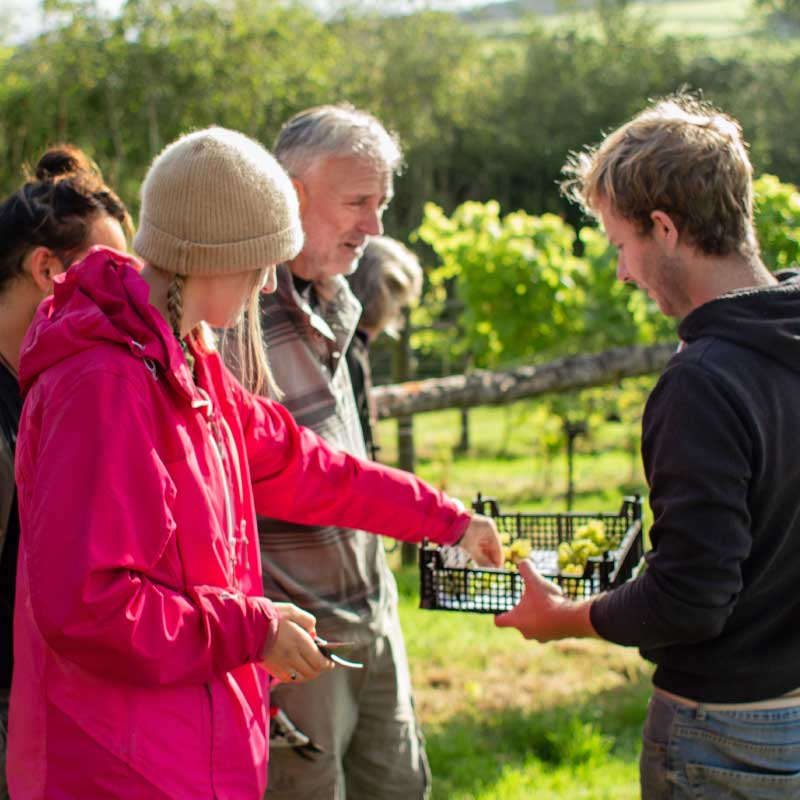 Learn on about harvest on our wine tasting gift experience