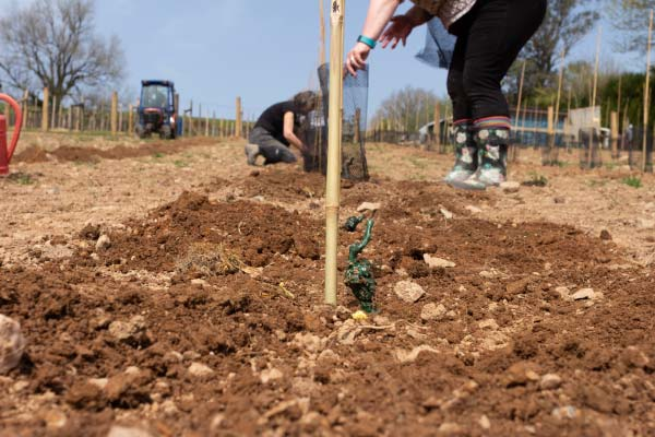 Planting our first English wine on Dartmoor