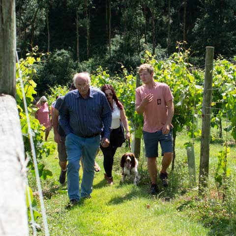 Walking the vines - Devon wine tasting