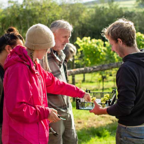Harvest - Devon wine tasting