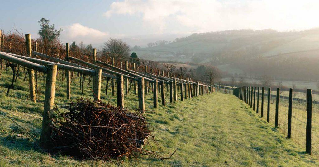 feb vineyard update
