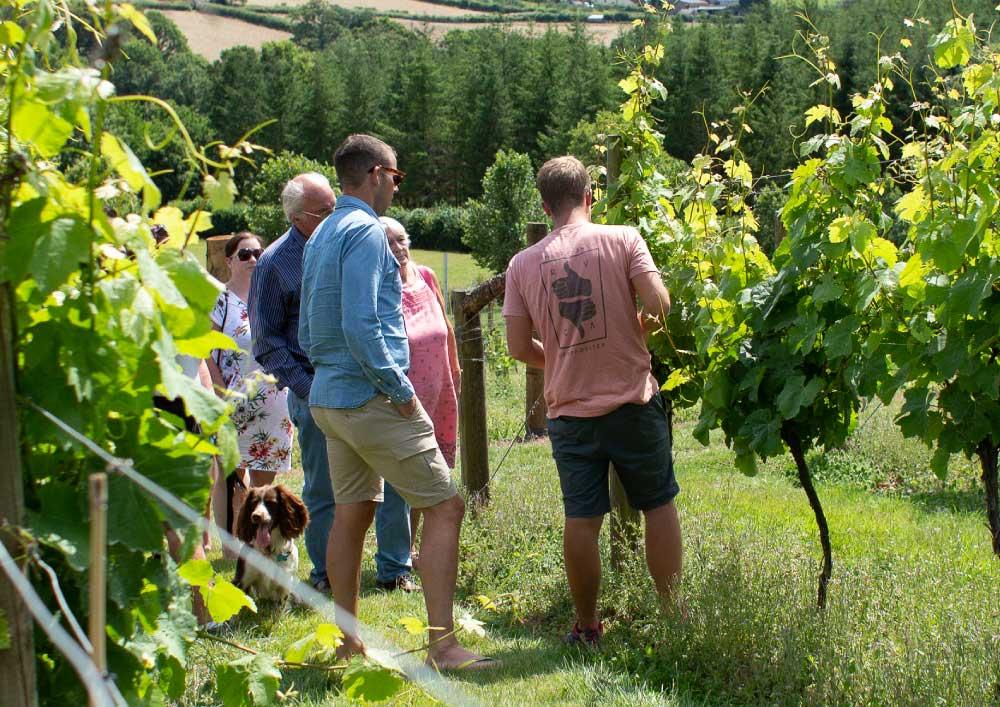 vineyard tour - Devon wine tasting