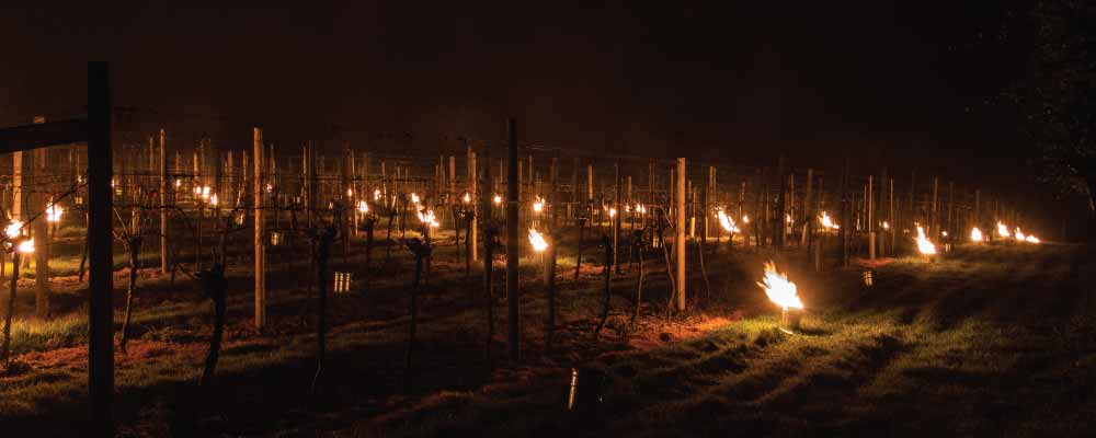 frost candles vines 1